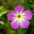 Pretty Pink by Bill Morgenstern