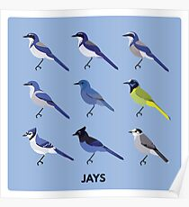 Jays Poster
