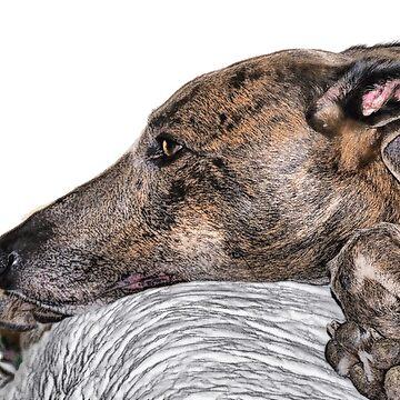 greyhound brindle by marasdaughter