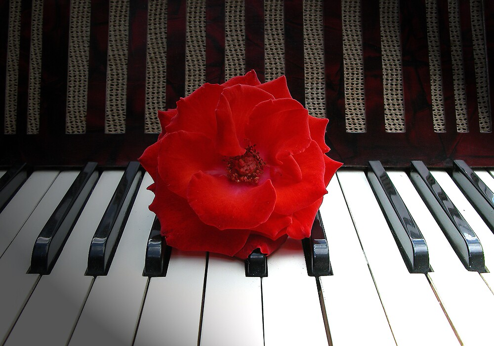 a rose is yust so beautiful like music by sjef