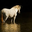 Standing in the Light by Sue  Cullumber