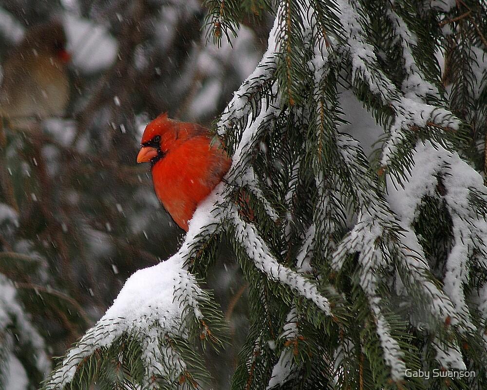 Winter Red by Gabi Swanson