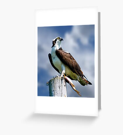 Osprey with Pike Greeting Card