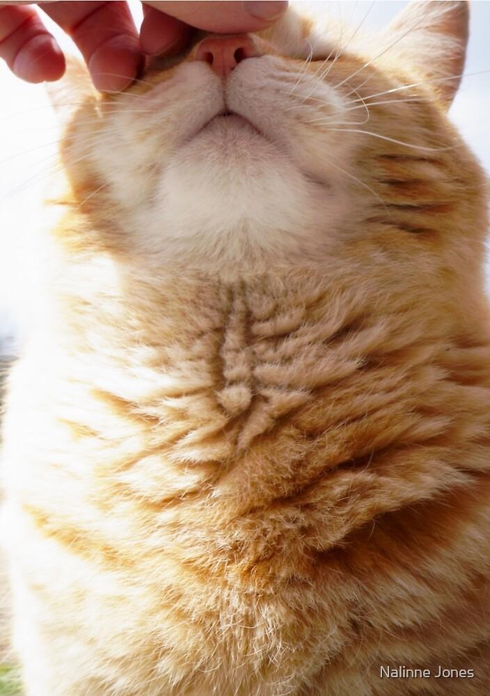 Petting a Fat Orange Cat by Nalinne Jones