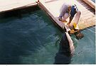 Playing with a dolphin by Moshe Cohen
