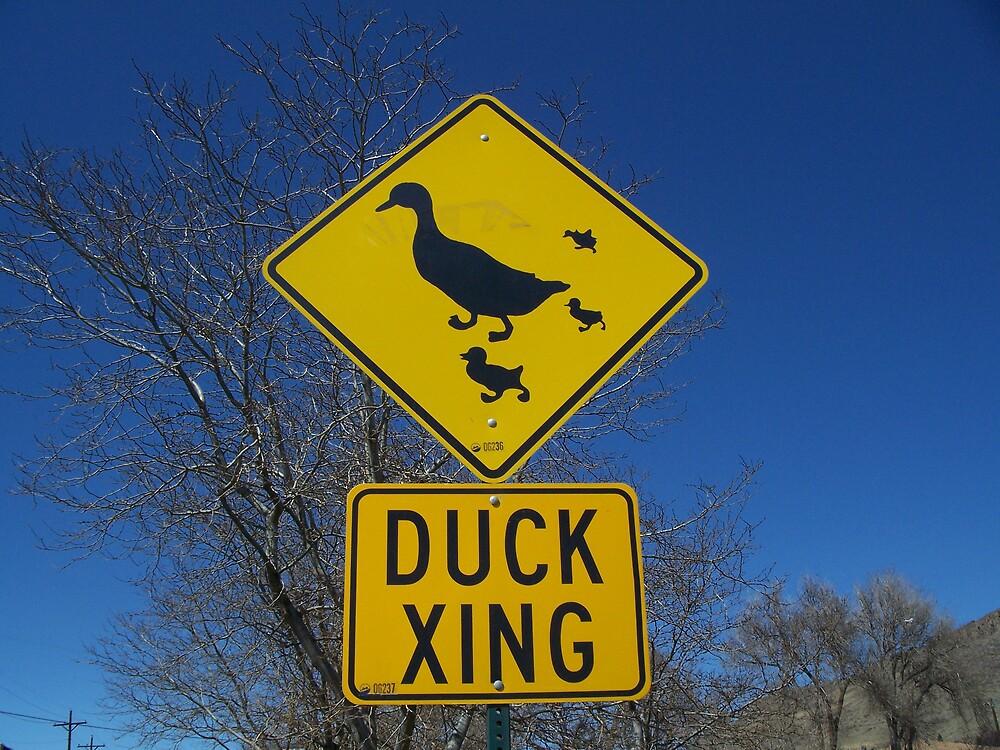 Duck Crossing by JLDunn