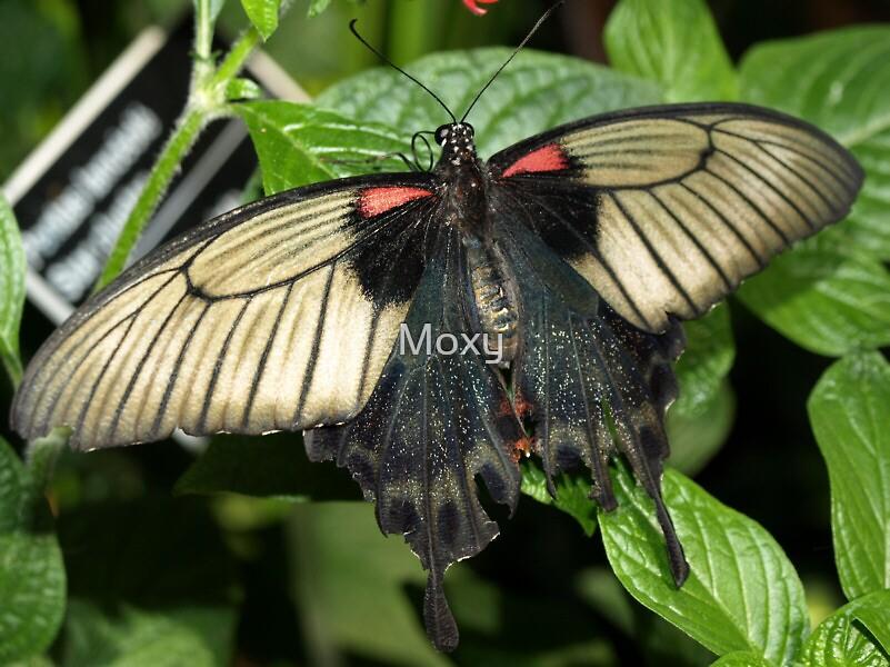 Butterfly 3 by Moxy