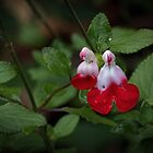 White & Red flowers Leith Park Victoria 20170427 0291  by Fred Mitchell