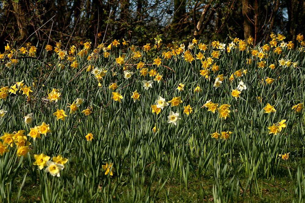 Spring has sprung by Bev Evans
