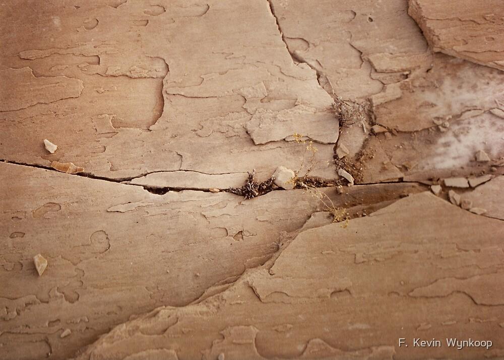 Utah Sandstone by F.  Kevin  Wynkoop