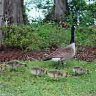 Mama And Five Babies by Cynthia48