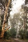 A Foggy Morning in the Bush by Christine Smith