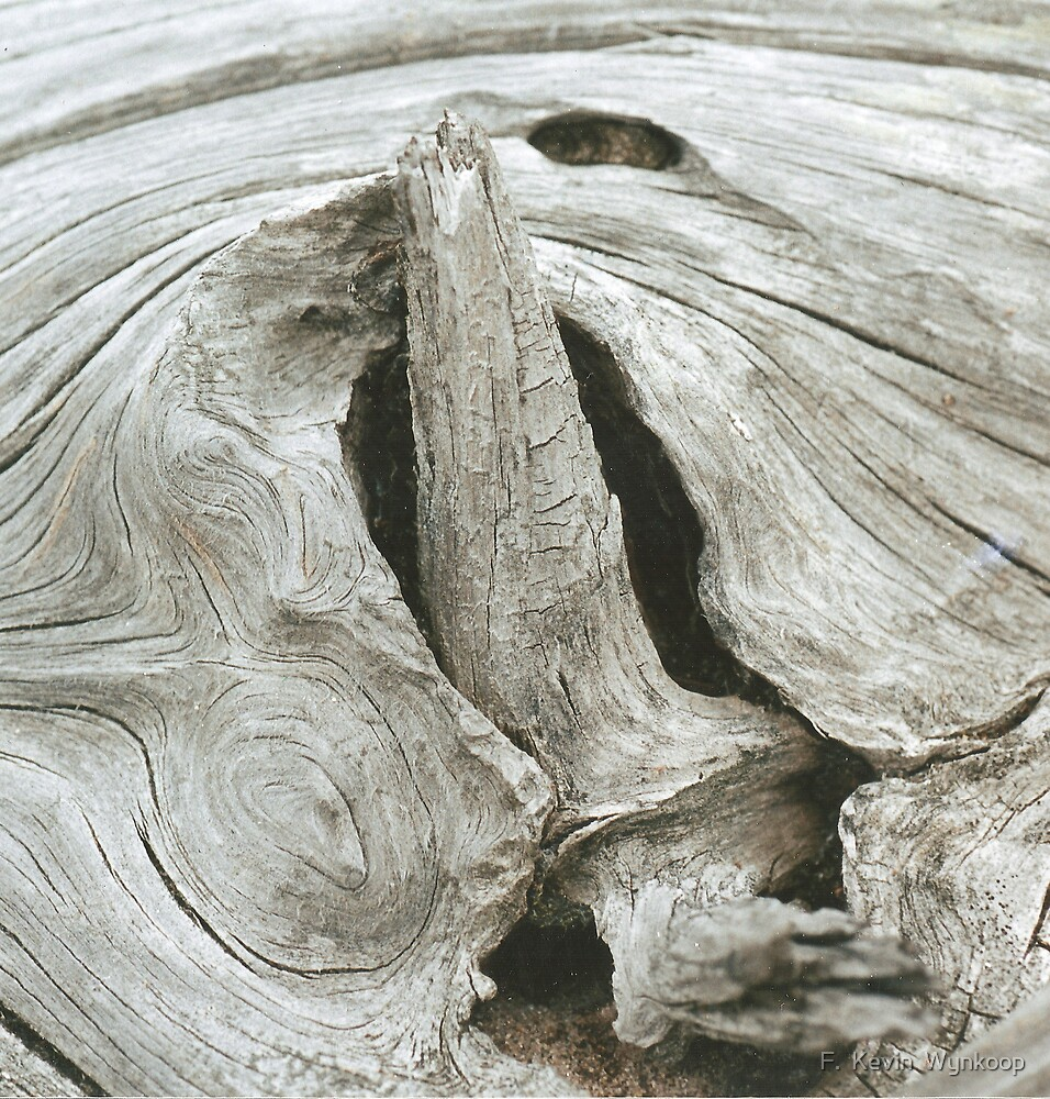 Hard Wood by F.  Kevin  Wynkoop