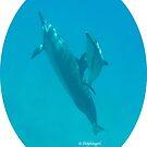 Dolphin Love by DolphingirlDove