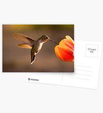 Sun Setting on a Hummer & Tulip Postcards