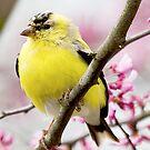 breeding colors by Jerry  Mumma