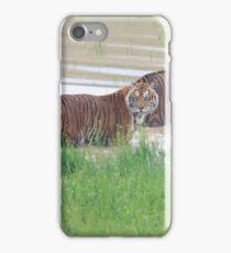Tigers in Habitat iPhone Case/Skin