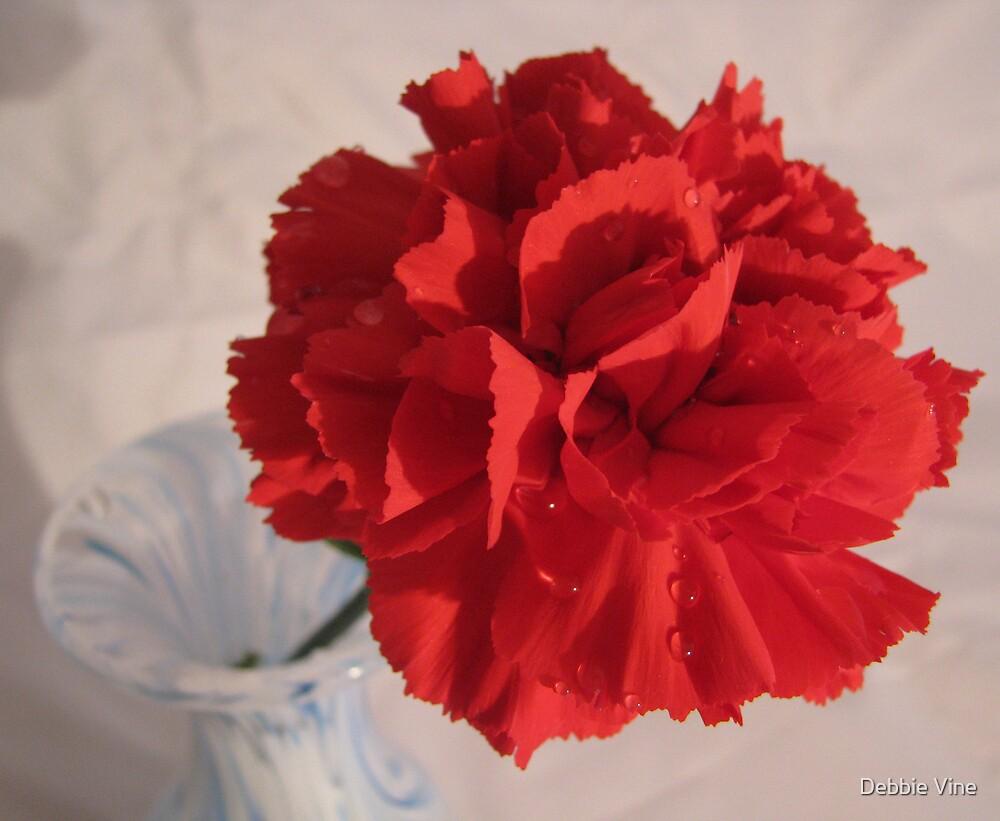 Red Carnation by Debbie Vine