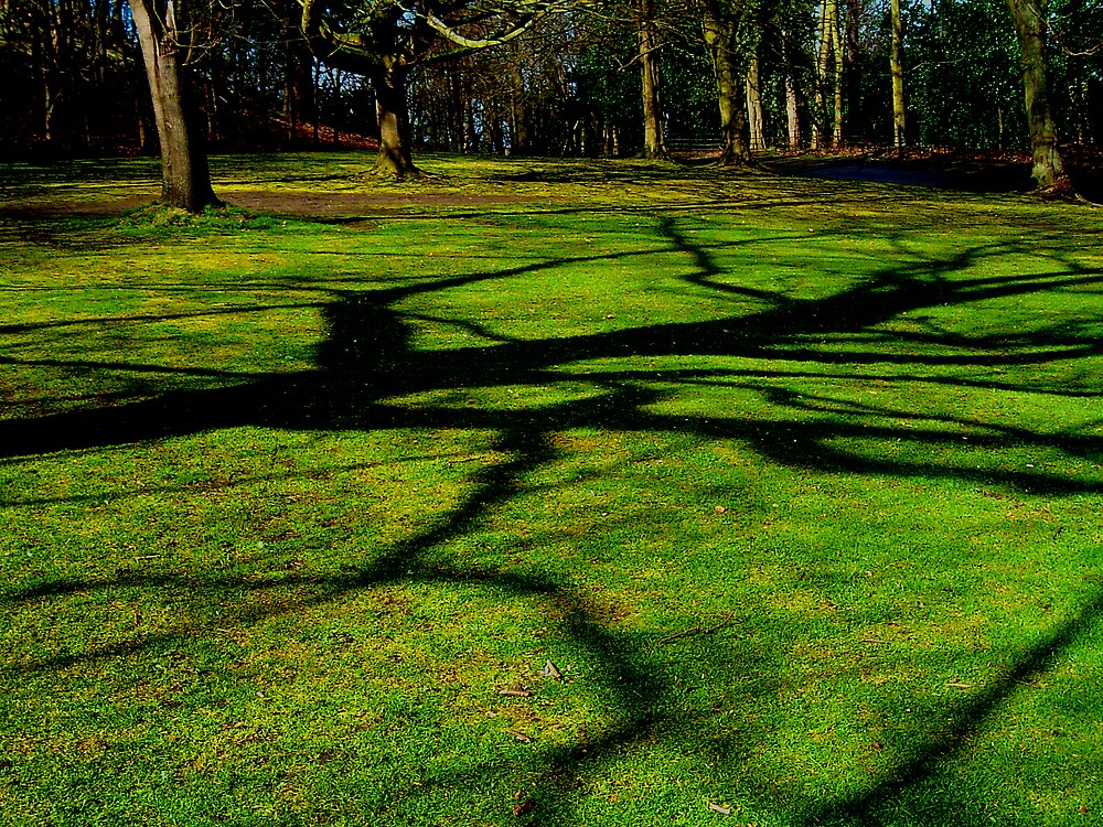Tree Shadow by Puffling
