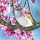 Sparrow by Jerry  Mumma