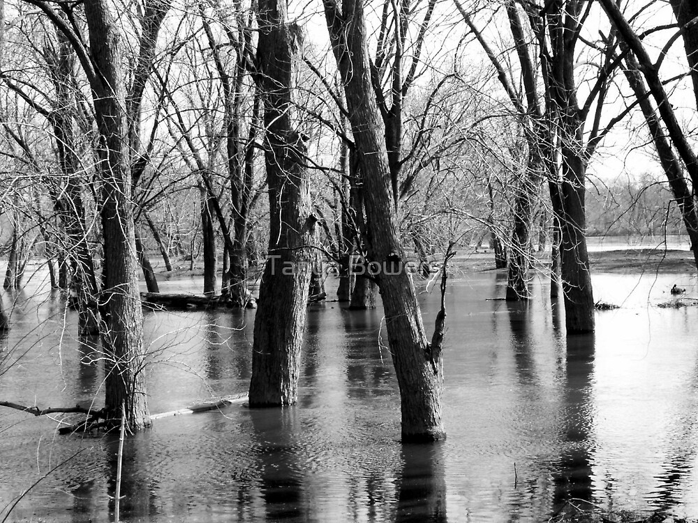 Flood Waters by Tanya Bowers