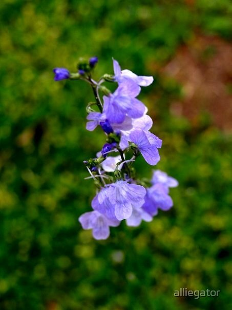 Purple Plant by alliegator