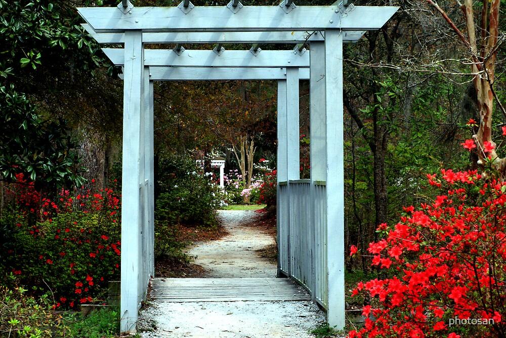 Enchanting Cypress Gardens by photosan