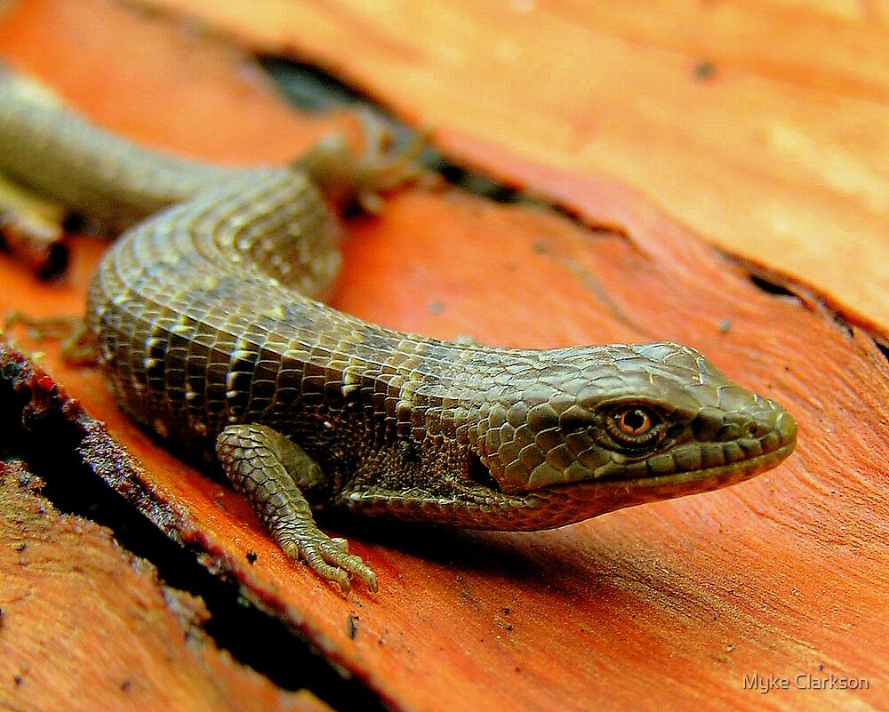 San Fransisco Alligator Lizard by Myke Clarkson