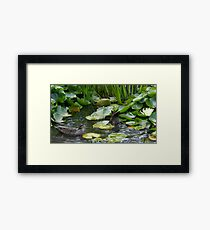 Duck, Dunk & Flower Framed Print