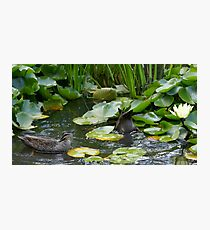 Duck, Dunk & Flower Photographic Print