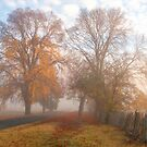 Play Misty For Me - Hill End NSW by Philip Johnson