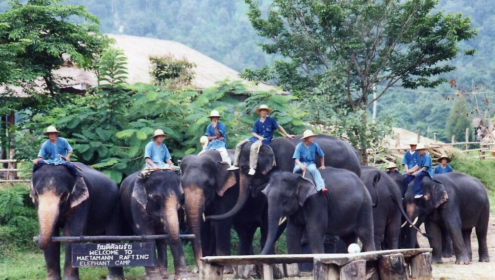 ELEPHANTS by oshun25