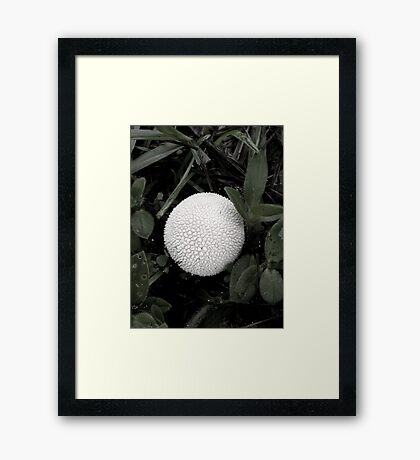 Puffball Framed Print