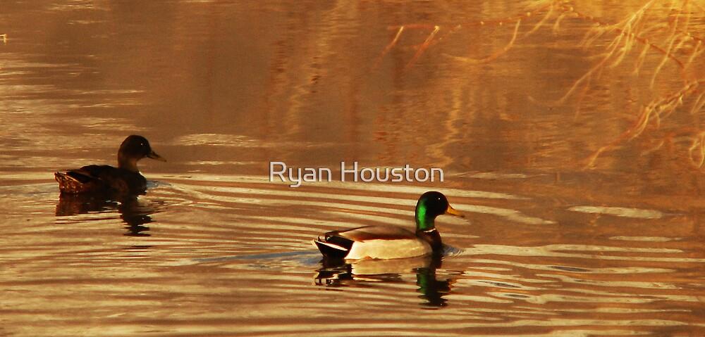 Mallard Drake & Hen - Golden Hour by Ryan Houston