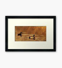 Mallard Drake & Hen - Golden Hour Framed Print