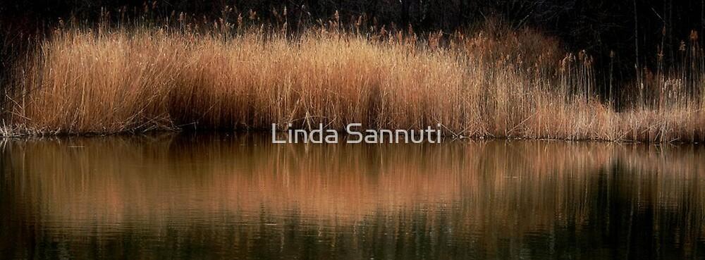reflections by Linda Sannuti