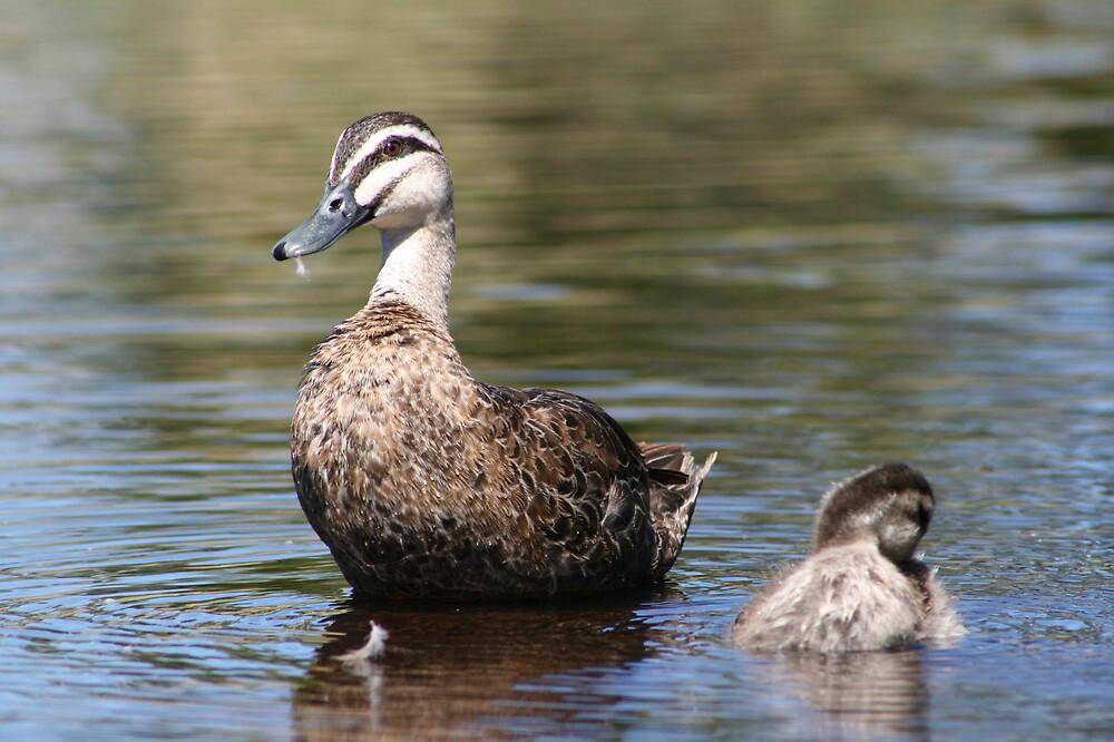 Duck and duckling by John Hansen