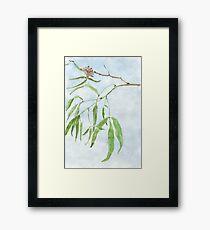 Rhus lancea leaves - Black Karee - Botanical illustration Framed Print