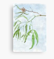 Rhus lancea leaves - Black Karee - Botanical illustration Canvas Print