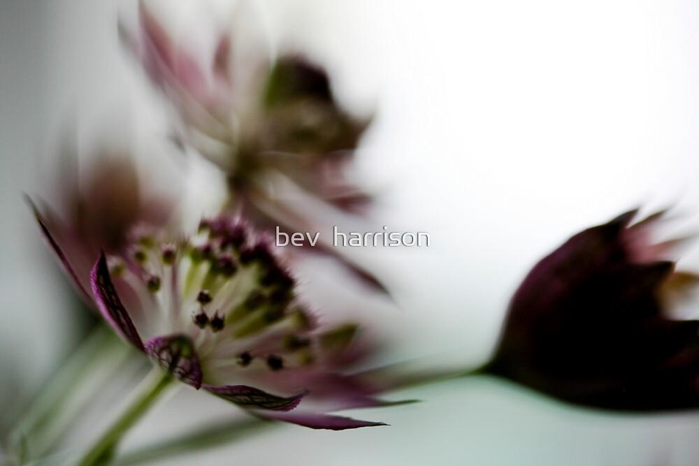 forgive me by bev  harrison