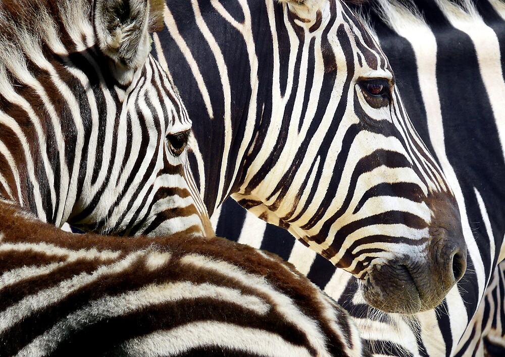 Stripes by JulieM