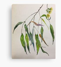 Gum leaves - Botanical illustration Canvas Print