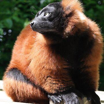 Red Ruffed Lemur by MrBanana