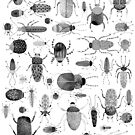 Ink Beetles by Nic Squirrell