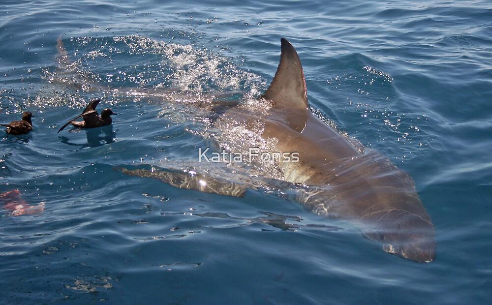 The beautiful Great White Shark by Katja Fønss