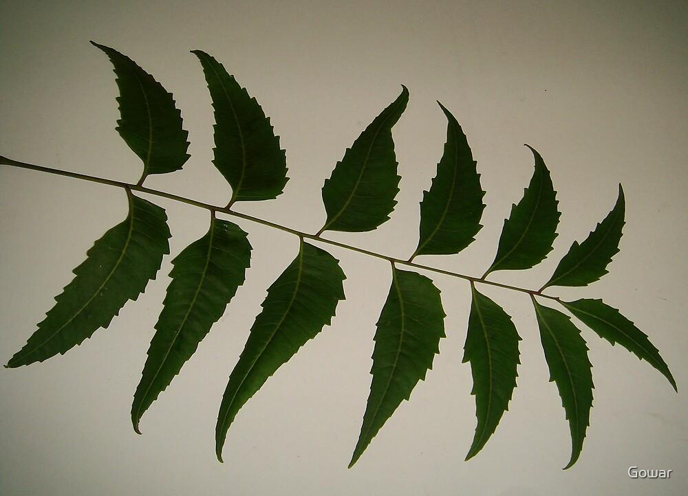 Neem Leaves by Gowar