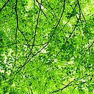 The Green Canopy by Peter Sweeney