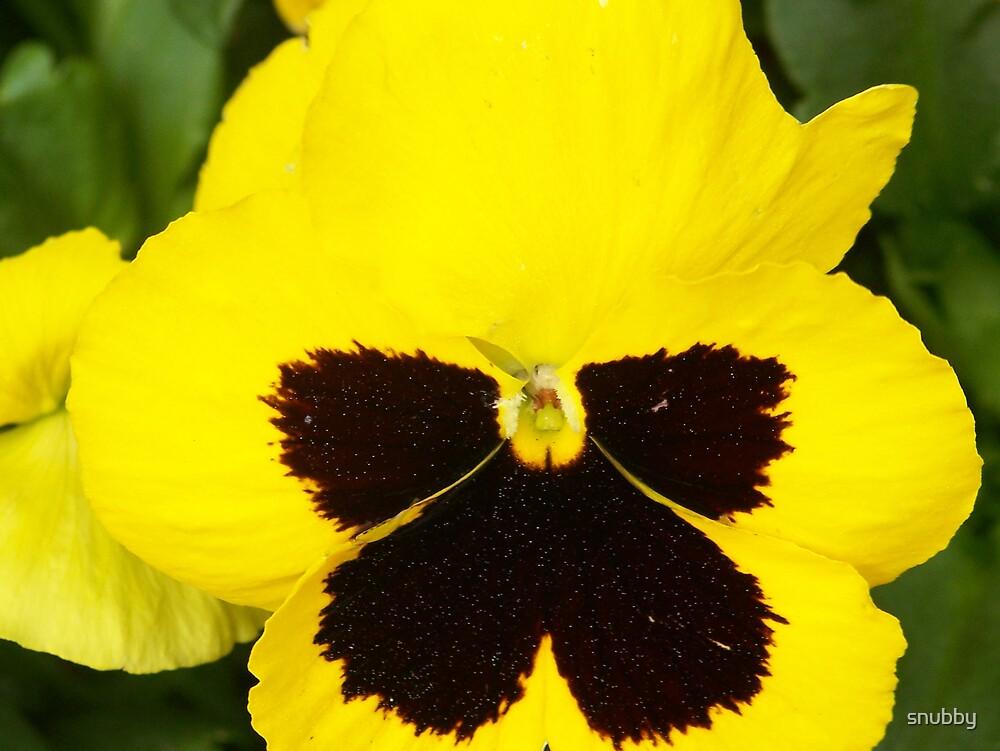 Hidden Butterfly by snubby