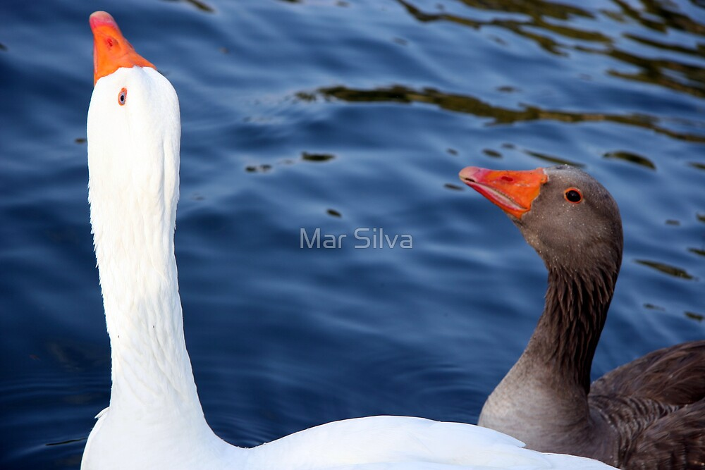 Did she just call me a duck? by Mar Silva