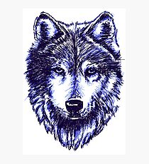 Timber Wolf - Blue Photographic Print